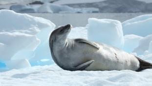Hűsöljünk! 8 tény, amit nem tudtál az Antarktiszról