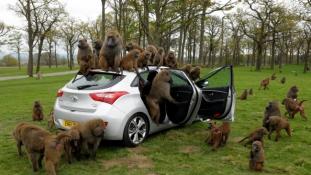 Egzotikus állatok és vadregényes tájak Ugandában