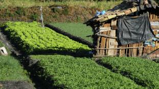 Székletkérdés: megtiltotta az USA a mexikói koriander importját