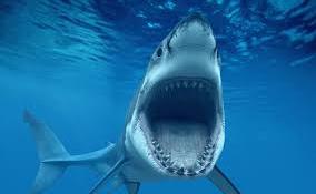 Szörfözőt harapott meg egy cápa Réunion szigeténél
