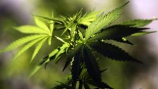 Szabad kokaint és marihuánát! – megkezdődött Braziliában a vita