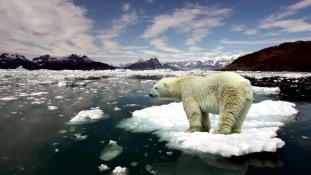 Mi lesz a jegesmedvékkel, ha elolvad a jég?