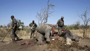 Kalasnyikovokkal gyilkolják az elefántokat