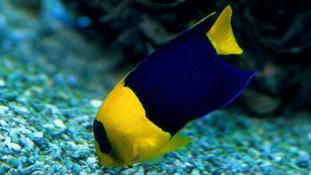 40 év alatt eltűnt a tengeri állatok fele