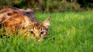 Mire vadásznak a macskák?