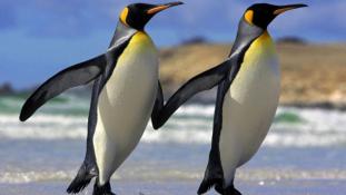 Itt a monogámia titka – a pingvinek megfejtették