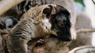Milyen meglepetések érhetnek Madagaszkáron?