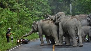 Elbántak a zajongóval a dühös elefántok