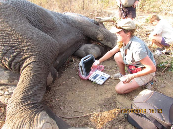 elephant-rescue-kariba