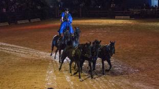 Magyar siker a marokkói lovasbemutatón