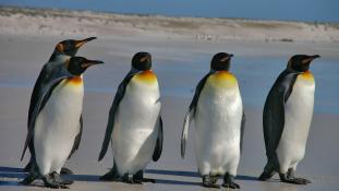 Forradalmasíthatják a légi közlekedést a pingvinek