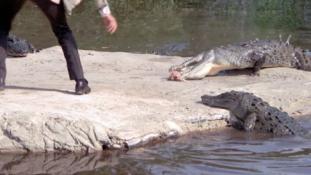 Krokodilokkal őriztetnék az elítélteket Indonéziában