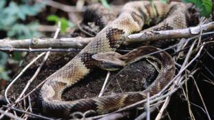 Gyerekharapás végzett a kígyóval
