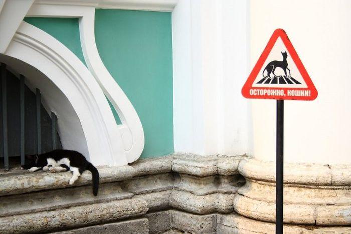Vigyázz, macskák!