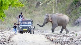 Egy falunyi embert ölnek meg Indiában az elefántok