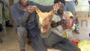 Kutyahúst árultak a piacon, őrizetbe vették az eladókat