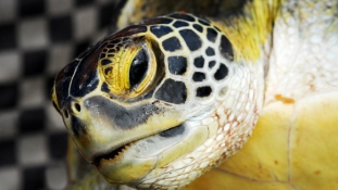 Új biztonsági fejlesztések – a teknősöknek?