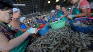 Garnélarák-bojkottal a thaiföldi rabszolgaság ellen