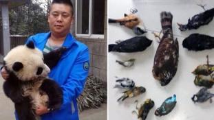 Védett madarakat evett és még el is dicsekedett vele