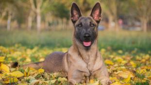 Nem csak Moszkvából kaptak kutyát a francia rendőrök