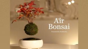 Láttál már lebegő bonszait? – most megmutatjuk