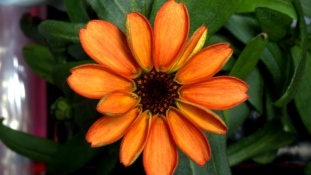 Íme az első, űrben ültetett virág