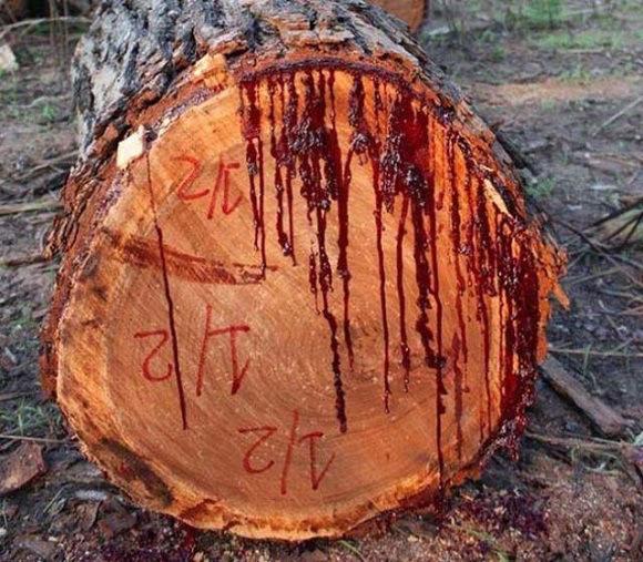 blood-tree-4