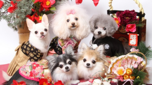 Köszöntsük az új évet kimonós kutyákkal