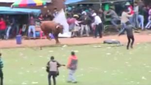 Kitört a pánik   – Elszabadult az őrjöngő bika (videóval)