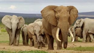 Cecilt lelőtték, az elefántokat eladják Kínának.. mi marad?