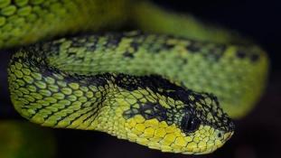 Kígyók miatt bezártak a strandok