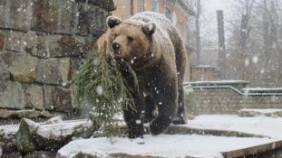 Ne az utcára dobja, vigye állatkertbe karácsonyfáját!