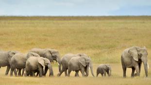 Vadorzók lőtték le az elefántokat óvó brit pilótát Tanzániában