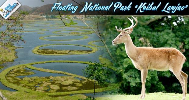 Keibul-Lamjao-national-park-manipur