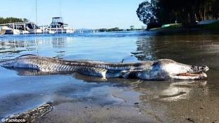 Ilyet még nem láttál  –   bizarr delfinkrokodil sodródott a partra