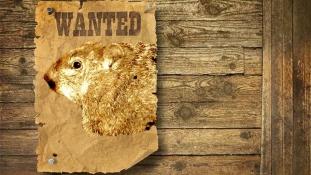 Rács mögött a mormota – tévesen jósolt korai tavaszt
