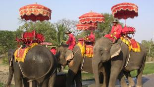Dühöngő elefánt ölt meg egy brit turistát Thaiföldön