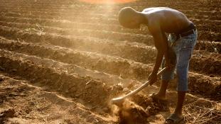 Csak semmi pánik, élelmiszerhiány van Malawiban
