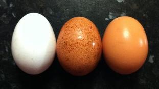 A nagy kínai tojáscsalás