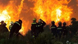 Ezeréves fák éghetnek porrá