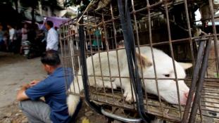 Tömeges kutyamészárlás ellen tiltakoznak az állatvédők