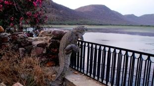 Nem gond a kerítés a krokodilnak