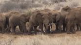 Csúcstalálkozó az elefántokért Kenyában