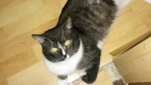 Macskája szüzességét árulja a neten