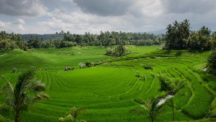 A Nap Képe – Bali