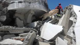 Szomjan halt a romok alól mentő kutya Ecuadorban