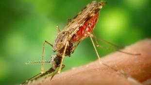 Szeméthegyek és eső: egyre többen halnak meg maláriában Angolában