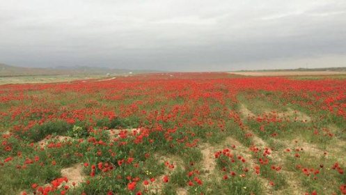 Tavasz. Türkmenisztán.