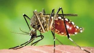 Vietnamban is felbukkant a zika