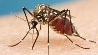 Tény: a zikavírus kisfejűséget okoz